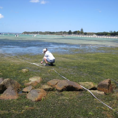 baseline monitoring existing marine environment ecologic